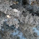 Winterimpression 2010