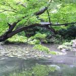 jap. Garten Kyoto