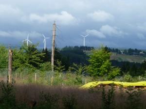 im Hintergrund die 3 Windräder von Hirschfeld